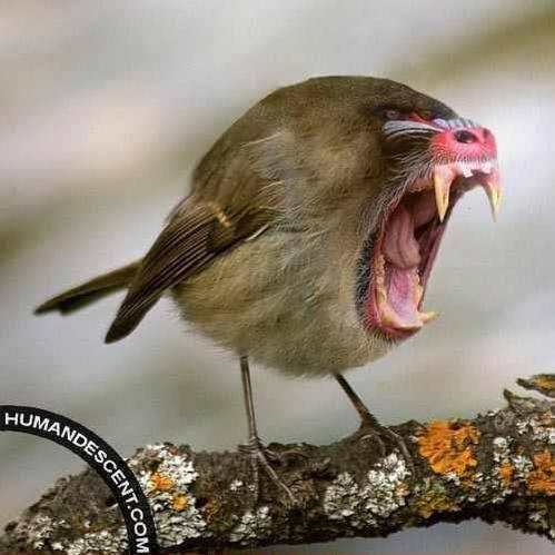 Affen Vogel