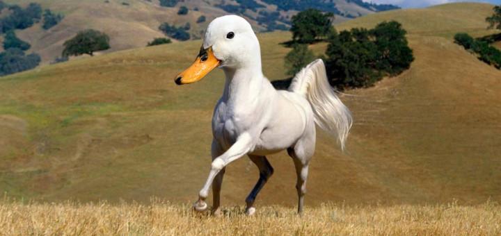 face swap tiere enten pferd lustig