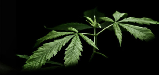 Cannabis auf Rezept - Weed Marihuana ETF Depot Börse Geld verdienen